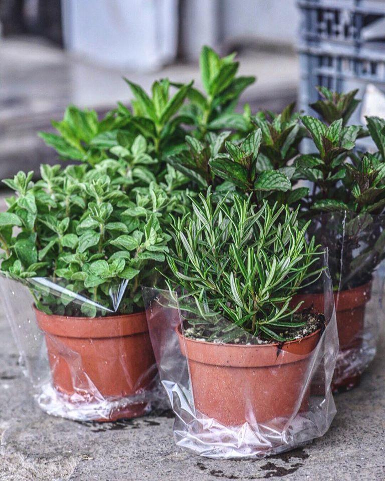 Αρωματικά,baby φύλλα,herbs,nature'sfresh,horeca,χονδρική