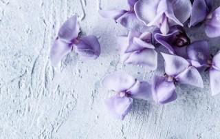 bean blossom, βρώσιμα λουλούδια,βρώσιμα άνθη,χονδρική,τροφοδοσία,nature's fresh,horeca