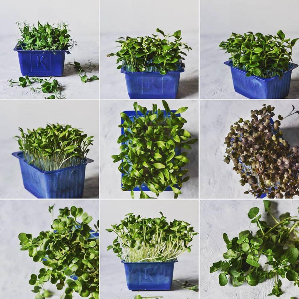 cress,cress-mix,living microgreens,κρεσσάκια,βλαστάρια,χονδρική,nature's fresh,horeca