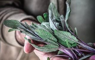 φασκόμηλο,sage,faskomilo,nature's fresh,horeca,χονδρική