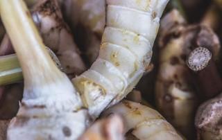 Γκάλανγκαλ,galangal,root,nature's fresh,horeca, χονδρική