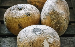Jicama,χικάμα,τζικάμα,nature's fresh,horeca,χονδρική,τροφοδοσία