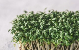 garden cress,κρεςς κάρδαμο,χονδρική,nature's fresh,horeca