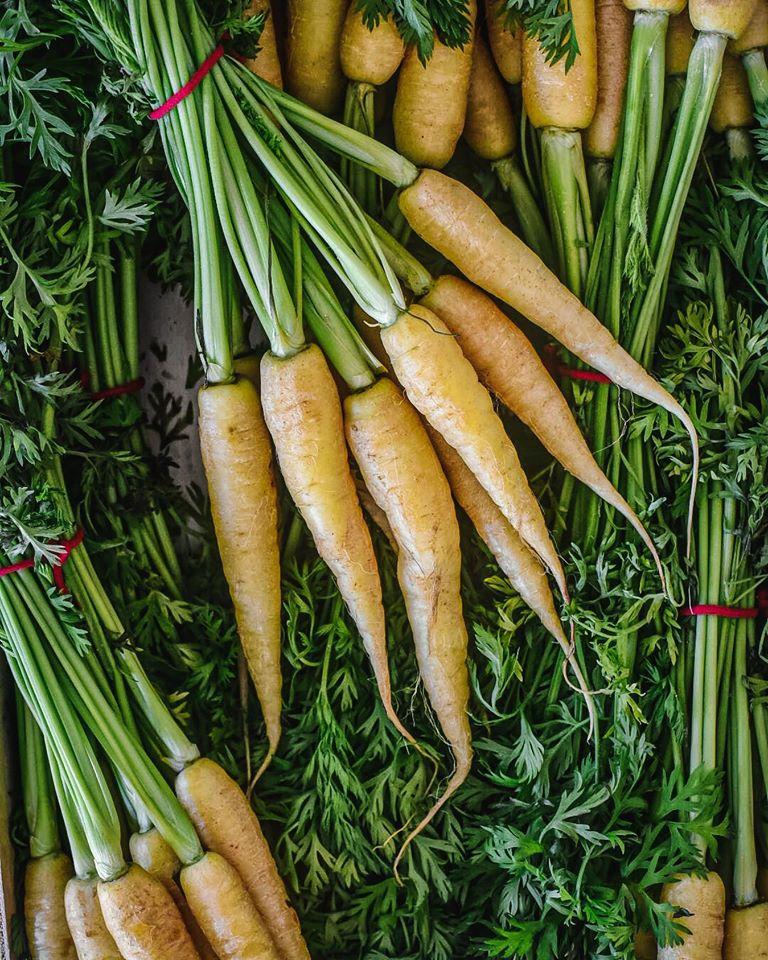 καρότα κίτρινα, yellow carrots,nature's fresh,horeca,χονδρική,τροφοδοσία