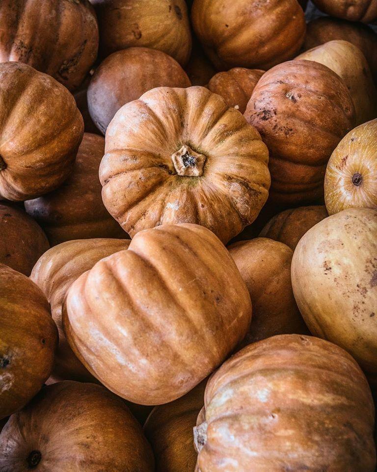 kolokitha, pumpkin,muskat,κολοκύθα