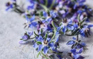 Λουλούδι Μποράγκο - Χονδρική και Λιανική - Βρώσιμα λουλούδια