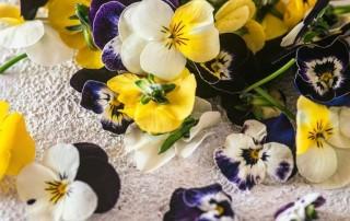 πανσέδες,cornabria blossom