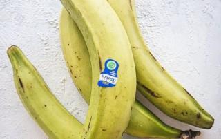 Plantains Μπανάνες,πλάταινς,nature's fresh,horeca,χονδρική,τροφοδοσία