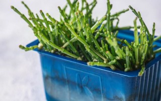 salicornia cress,χονδρική,nature's fresh,horeca