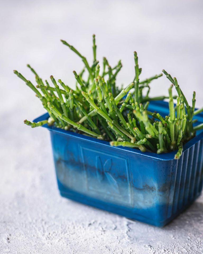 salicornia cress,χονδρική,nature's fresh,horeca
