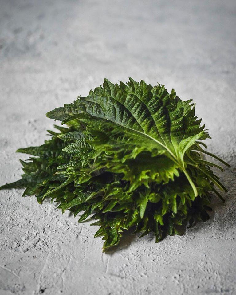 σίσο φύλλο πράσινο, ιαπωνική μέντα