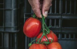 pomidori,nature's fresh,horeca,κομιντόρι