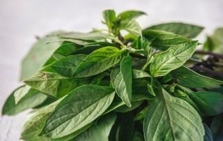 thai basil,βασιλικός ταυλάνδης,χονδρική,τροφοδοσία,nature's fresh , horeca