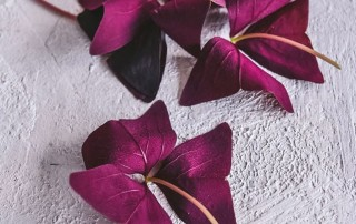 yka leaves, oxalis, οκαλίδα,χονδρική,τροφοδοσία,nature's fresh,horeca