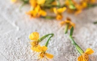 louloudi,λουλούδι βρώσιμο,βρώσιμα άνθη,χονδρική,τροφοδοσία,nature's fresh,horeca