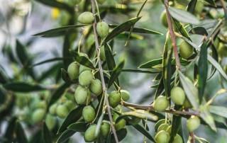 καλή σαρακοστή,nature's fresh,horeca,χονδρική,τροφοδοσία